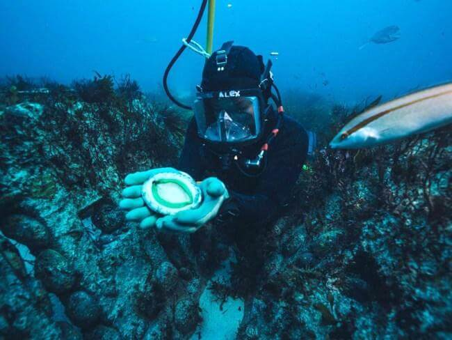 Alex Pare, WA's only female abalone diver